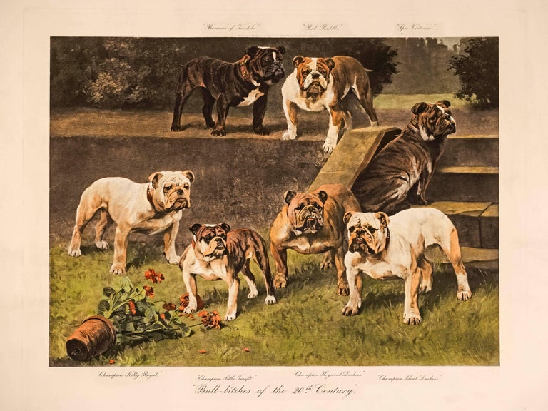Arthur Wardle Animal Print - Bull-Bitches of the 20th Century