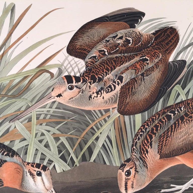 American Woodcock  - Realist Print by John James Audubon