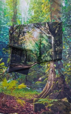 Kalee Appleton, Sunrays in Rainforest, unique framed photography print