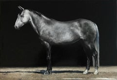"Photorealist gray horse with black background, ""Regent"", oil on linen"