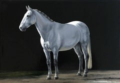 "Photorealist white horse with black background, ""Rio"", oil on linen"