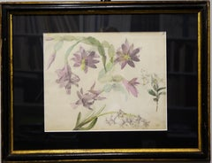 """Botany study ,Flowers"" watercolor  cm. 29 x 24 1890 ca"