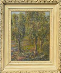 Early 19th C. Monterey Eucalyptus