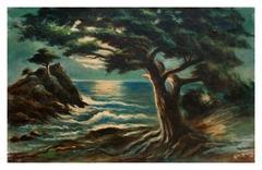Nocturnal Monterey Cypress Point