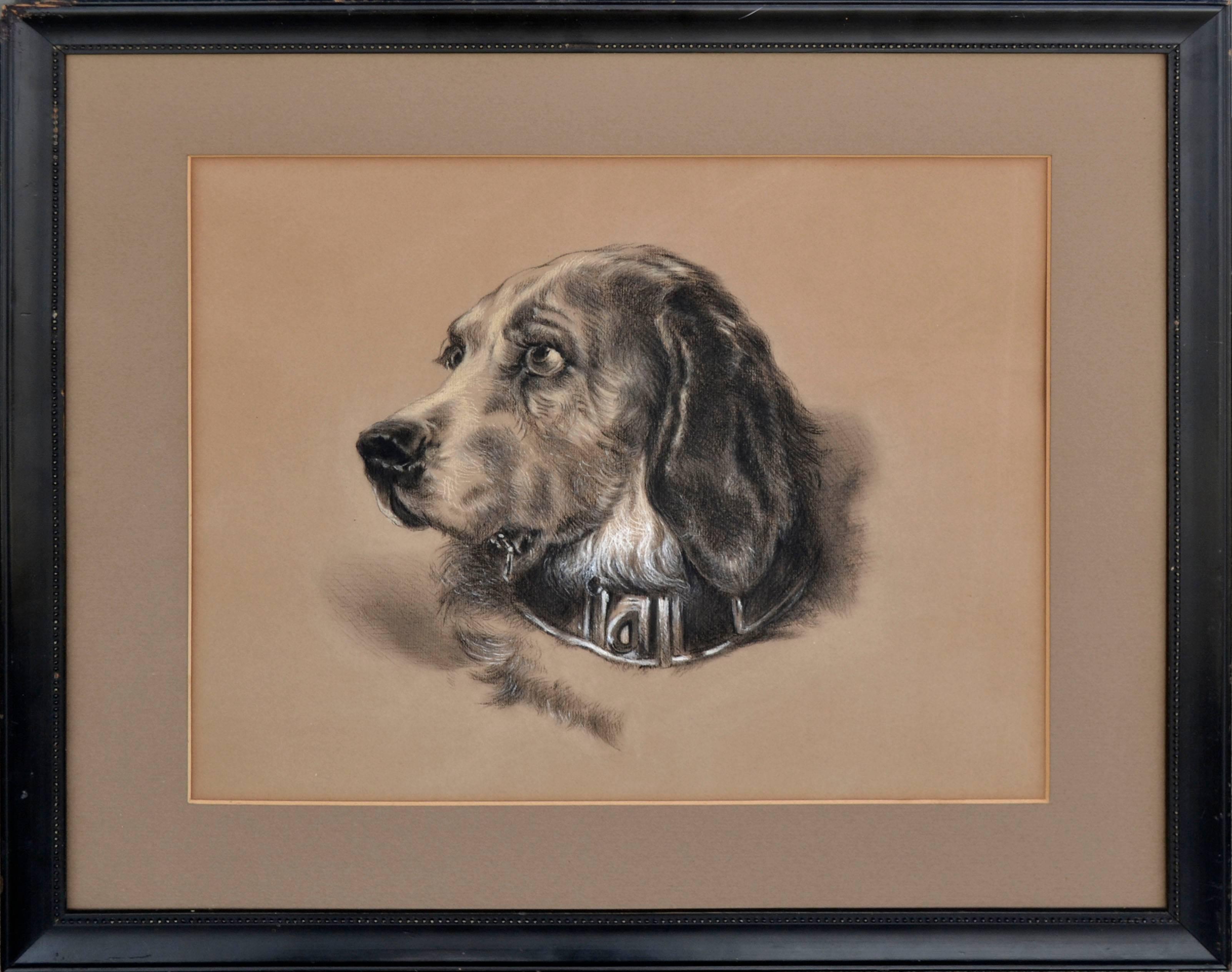 Early 20th Century Spaniel Portrait