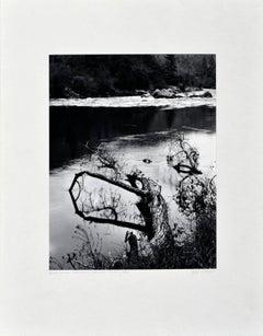 """Beaver-Downed Cottonwood"", Black & White Landscape"