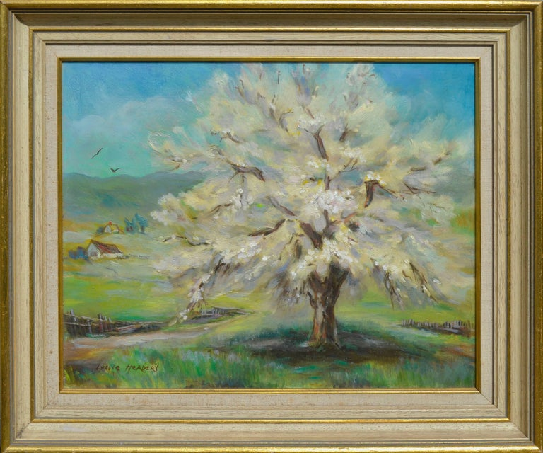Apricot Tree, Spring Blossoms