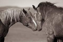 'Equus (Equal Us)', Wild Horses & Western Landscape Black & White Photography