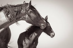 'Mother's Love', Wild Western Horses Limited Edition Black & White Photography