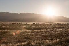 'Desert Sunrise', Wild Horses & Western Landscape Black & White Photography