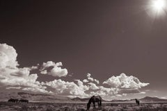 'Desert Sanctuary', Wild Horses & Western Landscape Black & White Photography