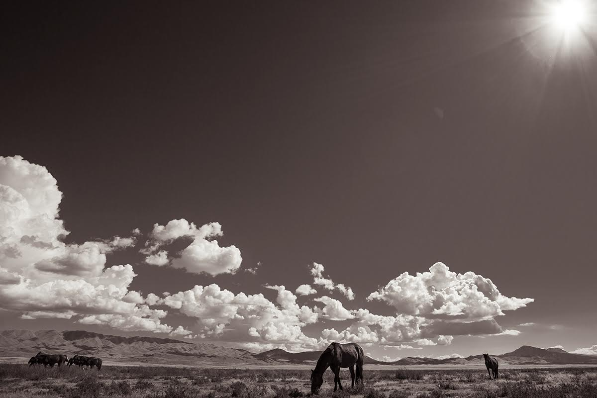 Desert sanctuary wild horses western landscape black white photography