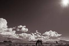 'Desert Sanctuary', Wild Horses & Western Landscape Black & White Photography
