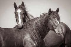 'Romeo and Juliet', Wild Horses & Western Landscape Black & White Photography