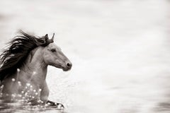 'Wild at Heart', Wild Horses & Western Landscape Black & White Photography