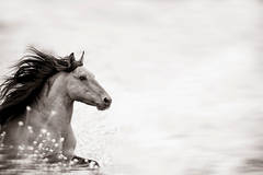 'Wild at Heart', Wild Horses & Western Landscape Black & White Photography