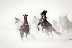 'Wyoming Renegades II', Wild Horse -  Black & White Photography