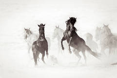 'Wyoming Renegades II', Wild Horse & Western Landscape Black & White Photography
