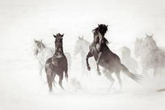 Wyoming Renegades II