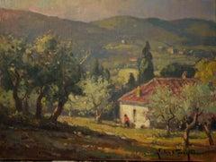 Olive Grove, Tuscany