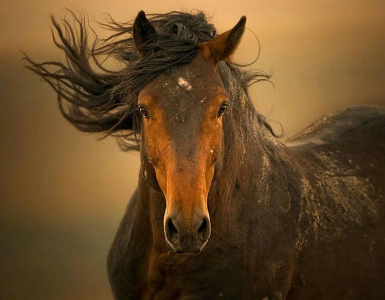 Esperanza - Photograph by Kimerlee Curyl