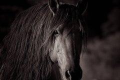 'Sacred*', Wild Horses, Black & White Photography