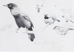 Violet manucode, Black-throated finch, Masked finch and Crimson finch studies