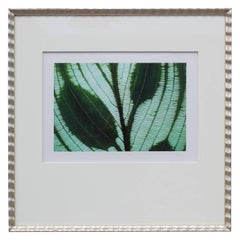 Botanical Photograph By Jim Laser