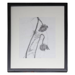 """Flowers 1"" Graphite Drawing"