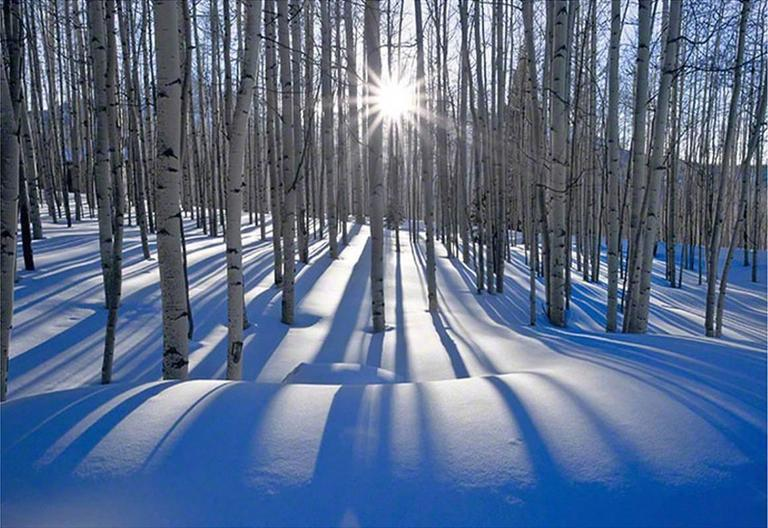 peter lik sunlit birches photograph for sale at 1stdibs