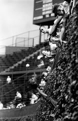 Field Practice in the Wrigley Vines, Chicago, 1961