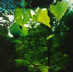 Bernheim (Arboretum) - Original Oil Painting with Dense, Vibrant Green Leaves