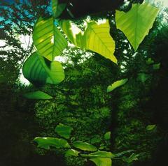 Bernheim (Arboretum)