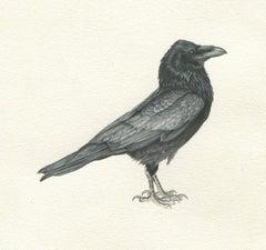 Consider the Ravens II