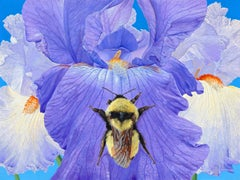 Iris with Bumble Bee