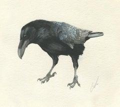 Censure Aqcuits Raven aka The Medici Raven, Vintage Florentine Frame