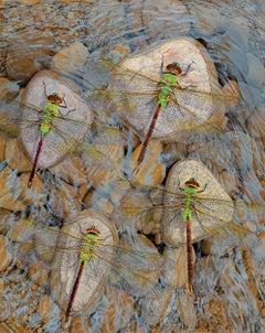 Rocks in the Current - Original Photorealist Painting of Dragonflies Atop Stones