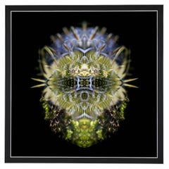 Bwiti - Abstract Photography