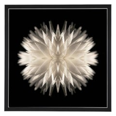 Lamina - Abstract Photography