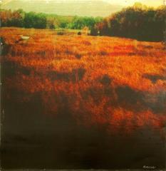 Field of Crimson 2