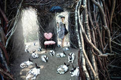 Wonder series, Untitled, [ Rabbits ]