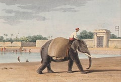 An Elephant by the River, Madras, Watercolor on Paper, 1828