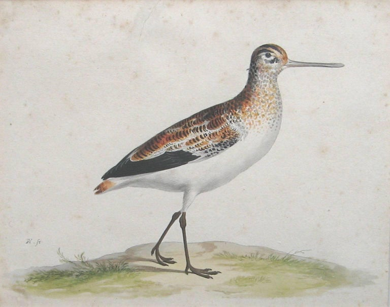 A Black-Tailed Godwit, Pen and Ink and Watercolor on Paper, Dutch