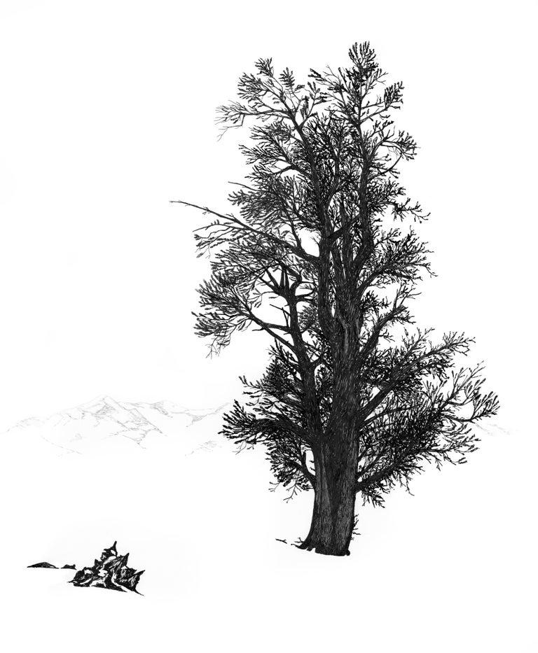 Ludo Leideritz Landscape Art - Bristlecone in Winter, White Mountains