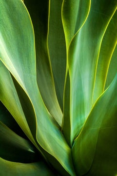 Waves of Agave
