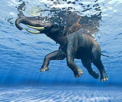 Ocean Dancers I