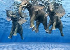 Ocean Dancers II