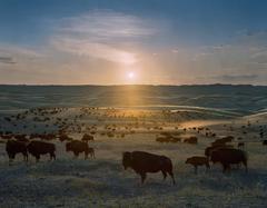 Flying H Buffalo Ranch, Walworth County, South Dakota