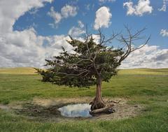 Homesteaders Tree, Cherry County, Nebraska