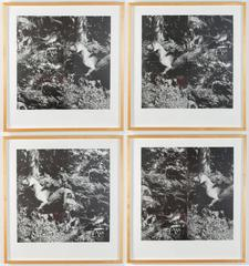 William Wegman - Bird Dog Suite, 1990